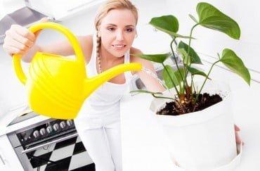 Jak podlewać kwiaty – 7 żelaznych zasad