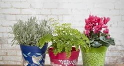 Kwiaty doniczkowe – podstawowe rady