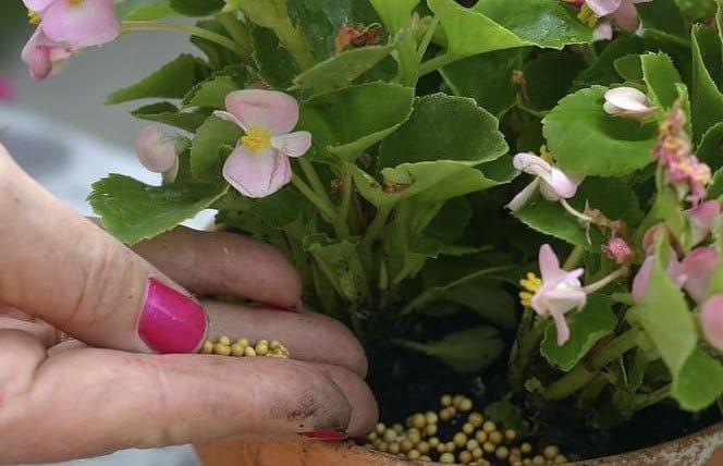 Jak i czym nawozić domowe rośliny doniczkowe