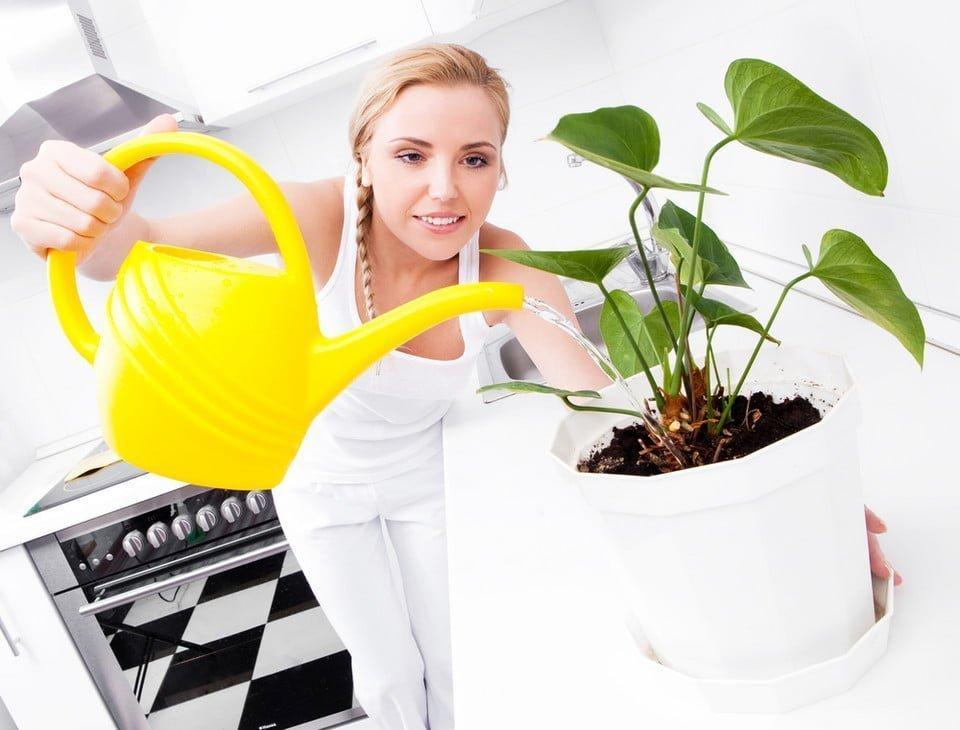 Jak Podlewac Kwiaty 7 Zelaznych Zasad Kwiaciarnia U Aldony